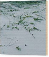 Sandscape Vines Wood Print