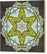 Sandstar Wood Print