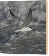 Sandwhich Tern Flies Over Stormy Waves Wood Print