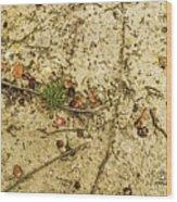 Sandy Crossraods Wood Print