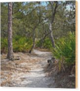 Sandy Path In Hunting Island South Carolina Wood Print