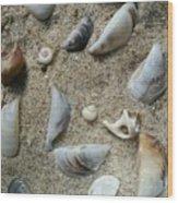 Sandy Seashells Wood Print