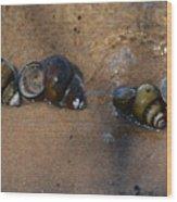 Sandy Shells Wood Print