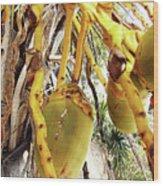 Sanibel Coconuts Gp Wood Print