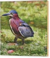 Sanibel Green Heron Wood Print