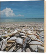 Sanibel Island Sea Shell Fort Myers Florida Broken Shells Wood Print