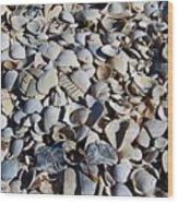 Sanibel Island Seashells I Wood Print