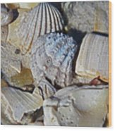 Sanibel Island Seashells Iv Wood Print