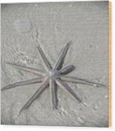 Sanibel Starfish Wood Print