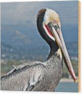 Santa Barbara Brown Pelican Wood Print