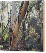 Santa Barbara Eucalyptus Forest Wood Print