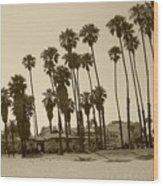 Santa Barbara Palms Wood Print