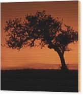 Santa Ynez Oak Tree Wood Print