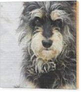 Santorini Dog Wood Print