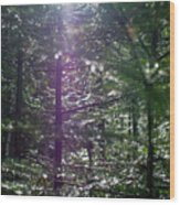 Saplings In The Sun Wood Print