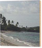 Sapphire Palms Wood Print
