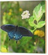 Sapphire Swallowtail Wood Print