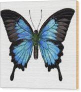 Sapphire Wood Print