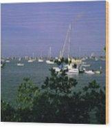 Sarasota Bay Harbor Wood Print