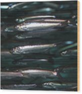 Sardine Wood Print