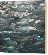 Sardines 1 Wood Print
