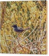 Sardinian Warbler Wood Print