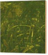 Sargasso Sea Wood Print