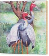 Sarus Cranes Wood Print