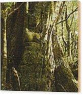 Sasafras On Myrtle Wood Print