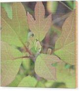 Sassafras Wood Print