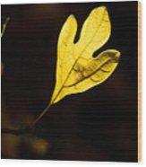 Sassafras Leaf Aglow Wood Print