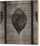Sassafras Leaves With Wicker Wood Print