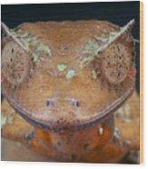 Satanic Leaf-tailed Gecko Wood Print