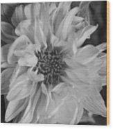 Satin Flora Bw Wood Print