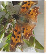 Satyr Comma Wood Print