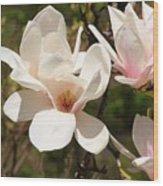 Saucer Magnolia Wood Print