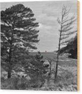 Saugatuck State Park In November Wood Print
