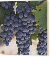 Sauvignon Grapes Wood Print