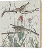 Savannah Finch Wood Print