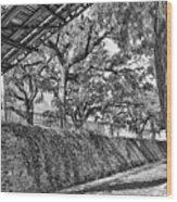 Savannah Perspective - Black And White Wood Print