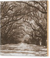 Savannah Sepia - Glorious Oaks Wood Print