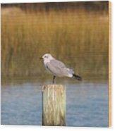 Savannah Shore Bird Wood Print