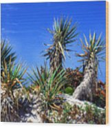 Saw Palmetto Canaveral National Seashore Wood Print