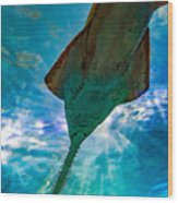 Sawfish Wood Print
