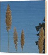 Sawgrass Blooms Wood Print