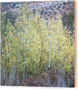Sawtooth National Forest 2 Wood Print