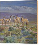 Say Cheese Antelope Wood Print