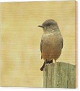 Say's Pheobe  Wood Print