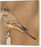 Say's Phoebe Looking Back With Insect Grasped In Beak Wood Print