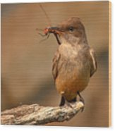 Say's Phoebe Pausing With Freshly Caught Red Dragonfly In Beak Wood Print